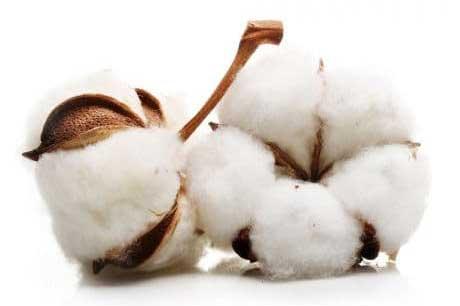 Baumwollindustrie